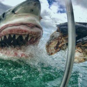 ryan-johnson-banner-shark-cage-600x338
