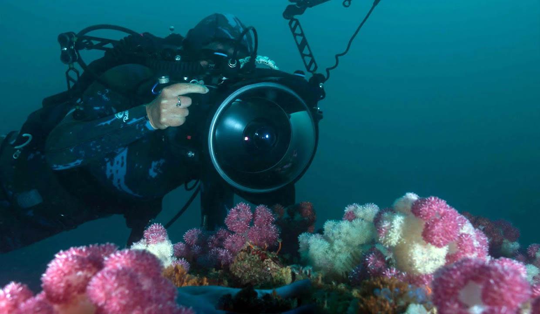 Underwater Photography – Preparatory Theory